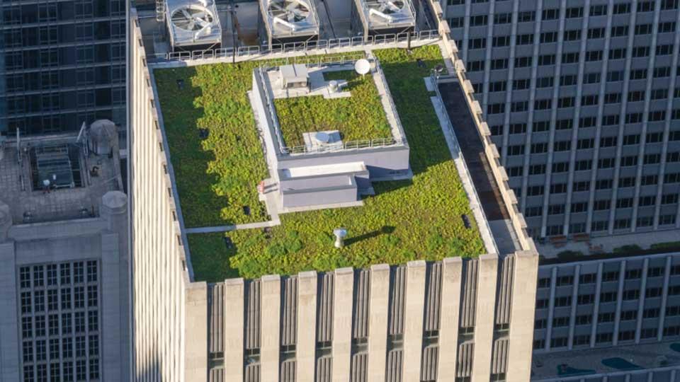 Lär dig mer om gröna tak